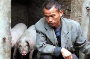 猪价暴跌的背后!