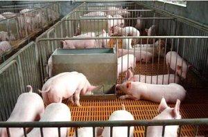 这3种模式养猪,不亏反赚!你会选哪种?