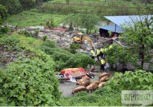 环保督察组暗访违规养猪场:方圆几里都能闻到臭味