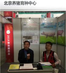 国内知名种猪企业,继续服务东北及华北的