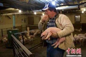 美国养猪户焦虑中美贸易摩擦:今