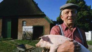 美国的养猪人也焦躁不安,到底是为啥?