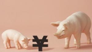 贵州投入1500万元扶持从江香猪产业?2020年实现饲养80万头
