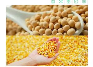 玉米与大豆抢地,价格