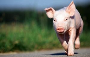 那些盲目跟风去养猪的饲料企业,你经历的噩梦也许仅仅是开始!