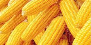 暴跌之下的豆粕、玉米价格后期将如何演绎