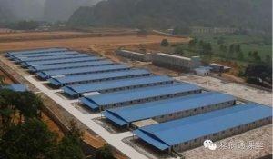 """规模养猪场生产如何把控""""营养、环境、兽药和疾病防空""""四大关口?"""