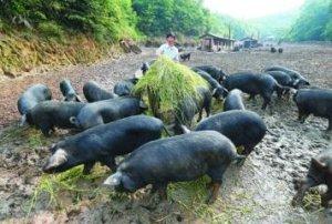 修订版农民专业合作社法于7月1日实施,未来的合作社怎么赚钱?