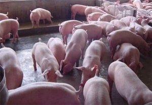 仔猪拉血?不同日龄仔猪腹泻大全,养猪人赶紧收藏!