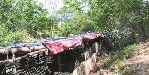 拆场:街道执法队拆除非法养猪窝棚270平方米