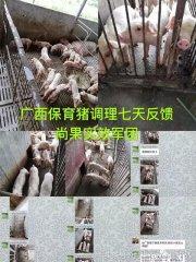 关于保育猪、产房腹泻、产程、及乳猪熊猫眼的四个案例!