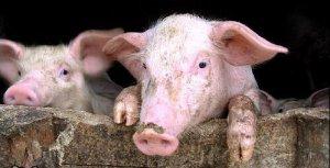 邵根伙离任大北农总裁 养猪业务部门负责人张立忠接任