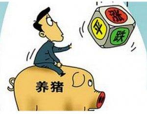 关于猪价的6点思考,条条正中要害……