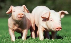 宁南县农牧局召开百万头生猪养殖大县创建培训会