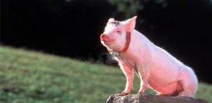 """佩奇、雷军、丁磊、马云,大佬们到底在搞什么""""猪""""名堂?"""