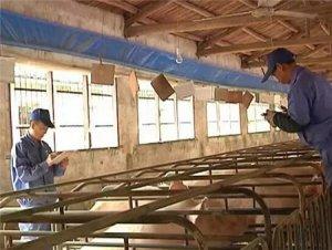 这些地方又多3000养殖场将被关闭,以后猪场臭气扰民也可能被取缔
