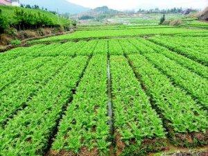转产退养 养猪场变身生态采摘园