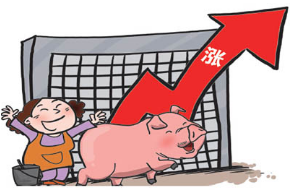 猪价全线上涨,养猪户们都该高兴了!