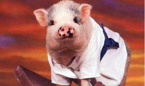 淘汰母猪的15条原则!这些你必须知道