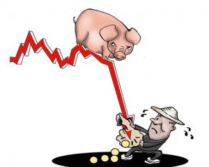 猪价止跌反弹是否意味后市将满血复活?