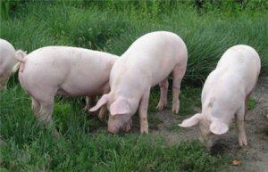 全国兽用抗菌药使用减量化行动试点养殖场名单公布 含26家猪场!