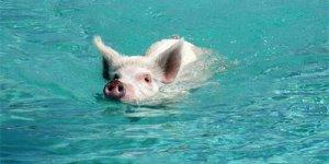 猪价再涨 但屠企实际结算价稳定,谁在捣鬼?