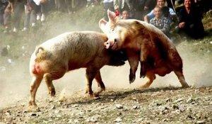 猪价再次飘红,养殖户小心陷入涨价陷阱!