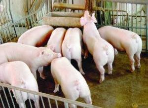 云南:大理州着力推动畜牧业向绿色环保转型