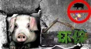 为什么猪场拆迁补偿多少不敢公开?只因为……