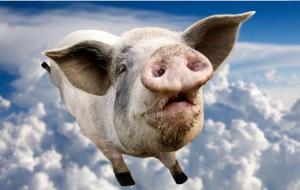猪场在可养区、有环保