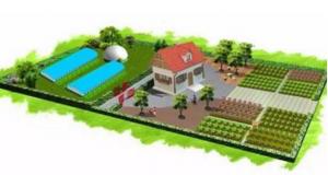 """为什么说""""公司+家庭农场""""将成为行业主流养殖模式?"""