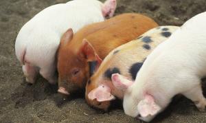 青海省大力提升畜禽养殖废弃物资源化利用水平