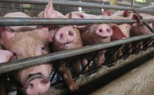 养殖户请注意丨当前农村养猪生产存在以下问题需解决!