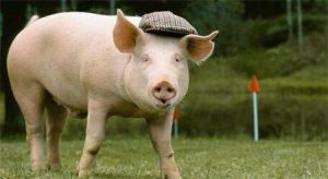 为什么说猪场最坚实的根基是成本,最高级的聪明是大气?