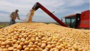 豆粕价格大幅上涨!加征关税国内大豆进口