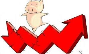 局部猪价小幅上涨 养殖户应从高出栏