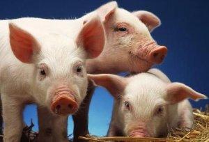 统计局│2018上半年生猪存栏40904万头,同比下降1.8%