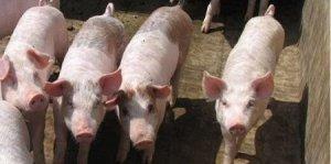 猪价窄幅波动,供需博