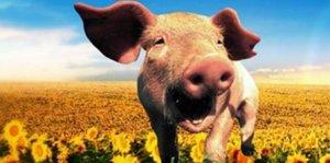 中国养猪业正在形成五大门槛(下)―政策、资金、技术篇