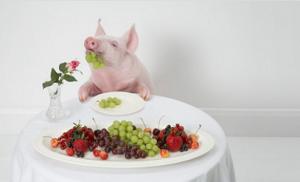 猪价形势继续向好,粮