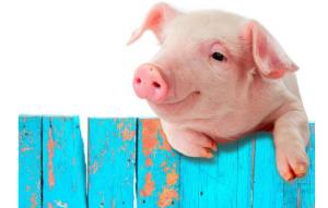 充满竞争?中小养猪户如何应对市场波动......
