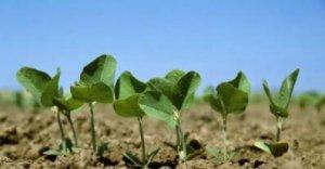 中央发话:每亩补贴500―800元,不种地的农民也可以领!