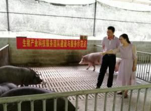 广西生猪产业科技服务团队为天峨县贫困村捐赠种公猪