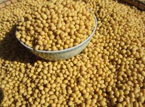 美国农业部:上周美国对中国大陆装运6.5