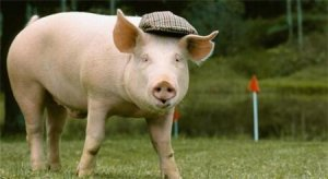 生猪价格阶段性反弹,业内估计下半年波动不会太大
