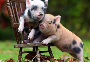 涨跌地区数量相当,各地猪价调整幅度略有收窄