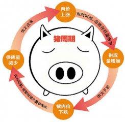 """""""猪周期""""超预期,生猪养殖企业下半年盈利承压"""