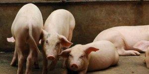 涨了!猪价上涨地区明显增多,大场有再度提价领涨意思!