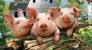 北猪南运受阻,疫情进一步造成南北猪价分化!综合看利好大于利空!