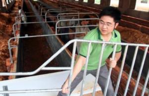 从猪场设计浅谈环境污染治理,建猪场如何
